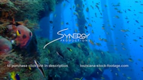 498 leg of oil rig reveals Epic underwater ecosystem in Gulf of Mexico