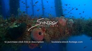 491 underwater ecosystem under oil rig offshore Louisiana coastline