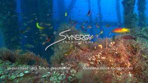 487 Amazing underwater ecosystem under oil rig gas platform offshore louisiana texas coast