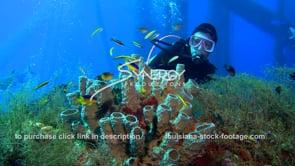 486 Awesome shot scuba diver observing marine life ecosystem under oil rig
