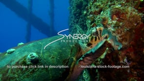 481 Hawksbill sea turtle finds food on oil rig gas platform ecosystem gulf of mexico