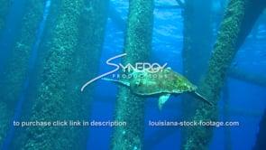 480 Hawksbill sea turtle swims under oil rig gas platform underwater ecosystem