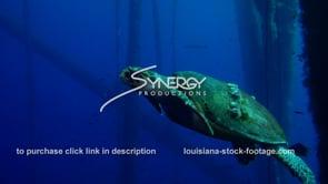 479 Hawksbill sea turtle swims under oil gas rig ecosystem offshore Louisiana Texas coastline