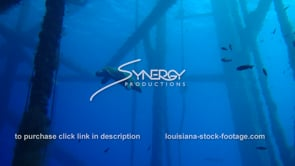 478 Hawksbill sea turtle swims under oil gas rig underwater ecosystem gulf of mexico