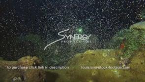1221 super epic coral spawning video