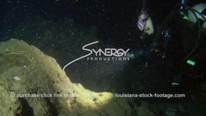 1218 scuba diver scientist observing coral spawning