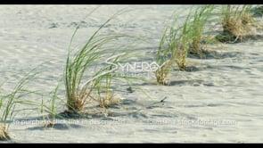565 grass buffer zone coastal erosion protection Louisiana wetlands stock footage video