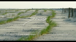 566 Nice WS grass planted coastal erosion protection wind blowing sand for land creation Louisiana