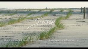 569 Louisiana coastal restoration effort grass planted on beach to prevent erosion stock footage