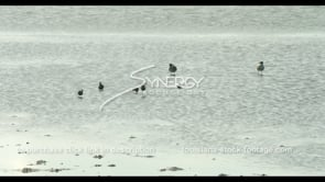 596 family of seagulls Louisiana Coastal wetlands coastal erosion