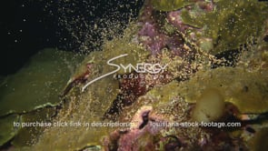1196 colorful star coral spawning video stock footage