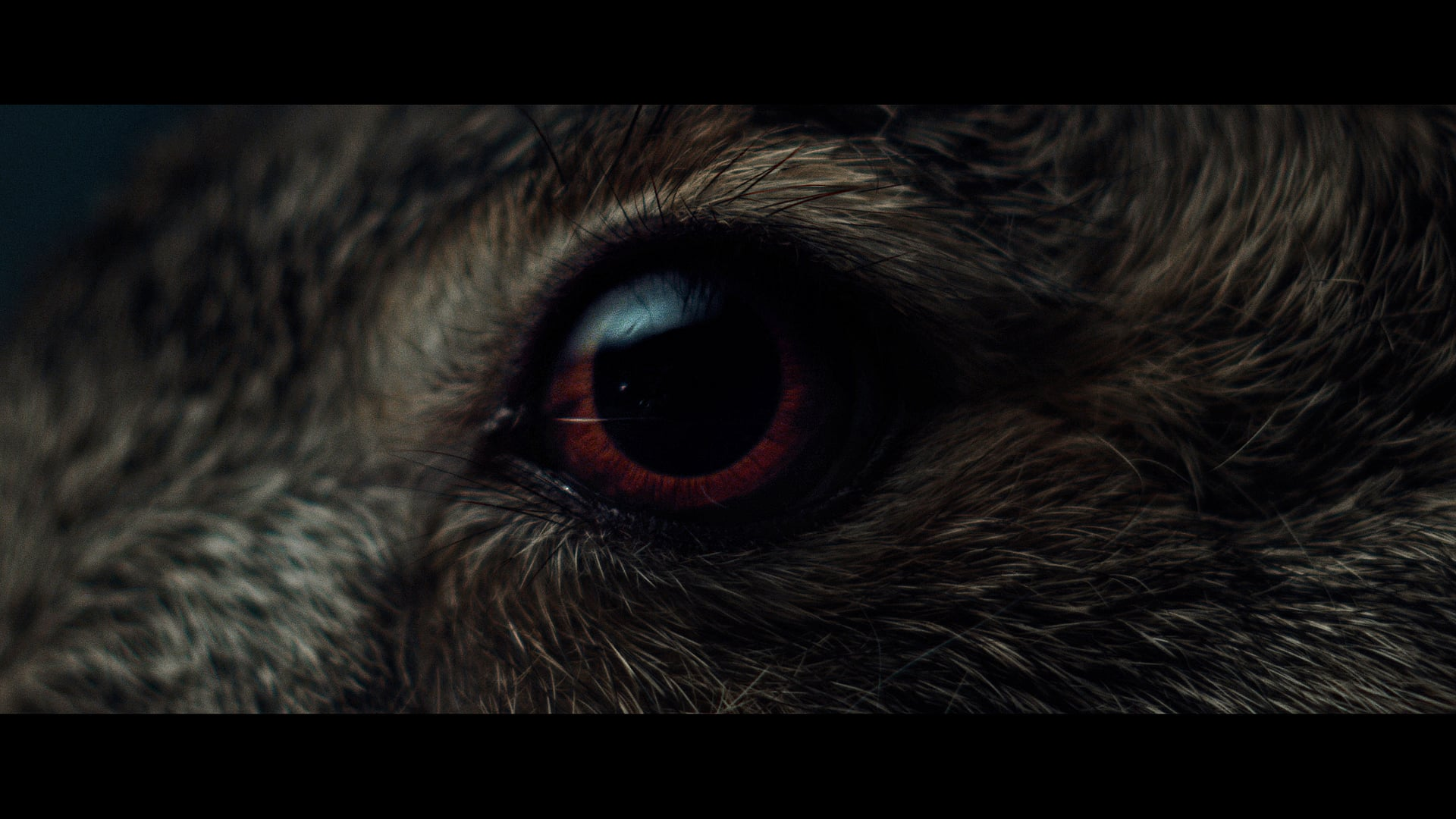 A Visual Ode to A Hare in the Woods - featuring Massimo Bottura