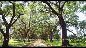 1145 epic oak tree alley dolly shot