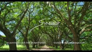 1144 Epic shot oak tree alley video stock footage
