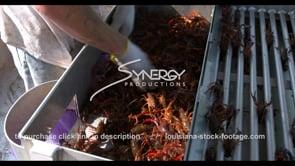 643 fisherman sorting crawfish into sacks