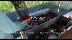 635 crawfish catching and sorting Louisiana seafood