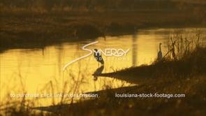 649 White egrets in golden morning sunrise light