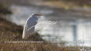 655 Nice profile of egret CU