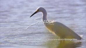 656 Very nice shot egret feeding on crawfish CU