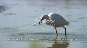 658 Epic awesome shot egret feeding on crawfish CU