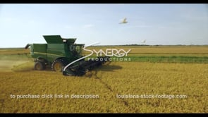 672 egret birds fly near tractor harvesting rice aerial drone view