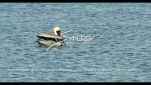 680 pelican flaps wings