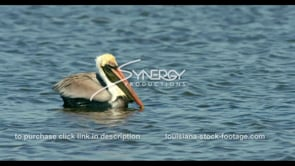 681 pelican floating on a lake