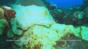968 massive coral die off video diseased coral global warming effects