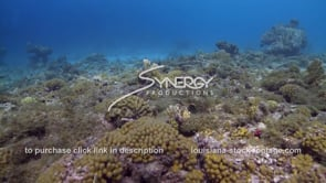 959 dead coral areas on ocean floor