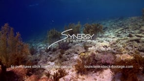 957 unhealthy areas of coral reef