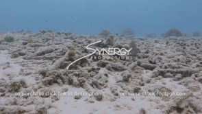 954 dead coral reef