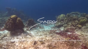 953 pollution sedimentation runoff from land affecting coral reefs