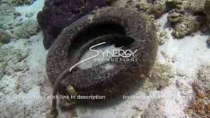 949 tire pollution on sea floor coral reef pollution stock video footage