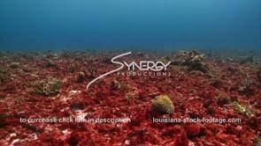 948 red algae on sea bottom in caribbean sewage pollution fertilizer runoff