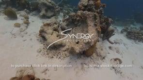 941 dead coral head in caribbean global warming