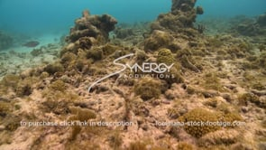 939 dying unhealthy coral reef from global warming