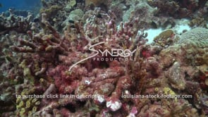 933 dead dying coral global warming in caribbean