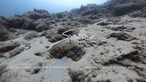 930 dead coral reef from climate change global warming