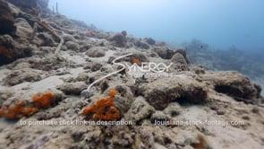 929 global warming dead reef stock footage video