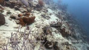 928 dead smothered coral from beach and land erosion