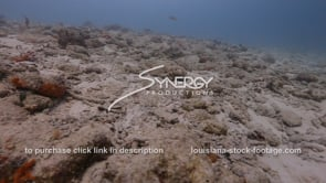926 dead decimated coral reef stock video footage