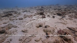 925 dying and dead coral stock footage video