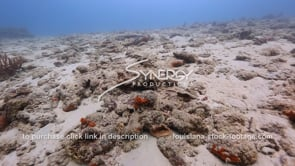924 dead coral from pollution and sewage runoff