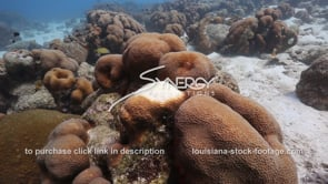 922 coral bleaching stock footage video