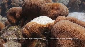 921 coral bleaching coral disease