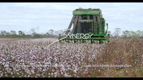 920 cotton eye level view farmer harvesting cotton