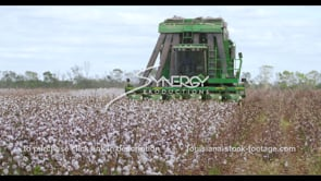 919 Nice shot tractor harvesting cotton tilt down to cotton