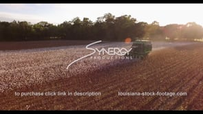 916 Epic awesome sunset on cotton farm harvest stock footage video