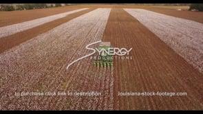 909 cinematic epic cotton agriculture aerial