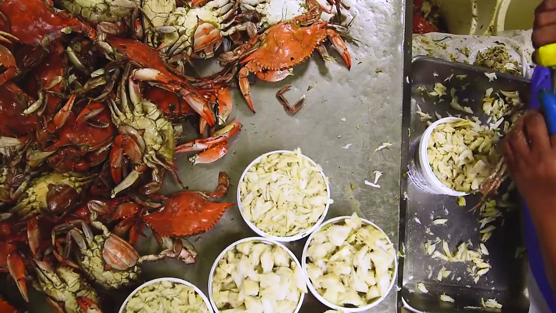 How To Pick A Crab _Joyce Fitchett